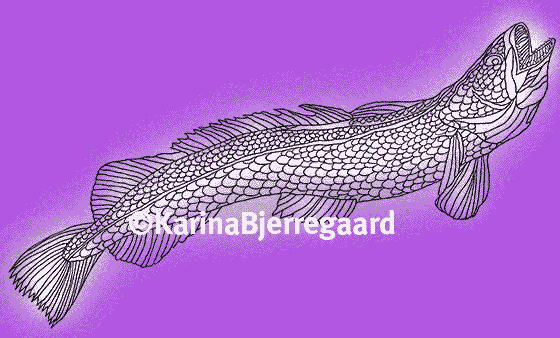 karina_bjerregaard_hake