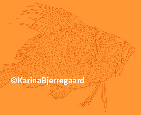 karina_bjerregaard_skt_petersfisk