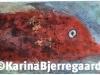 karina_bjerregaard_gurnard